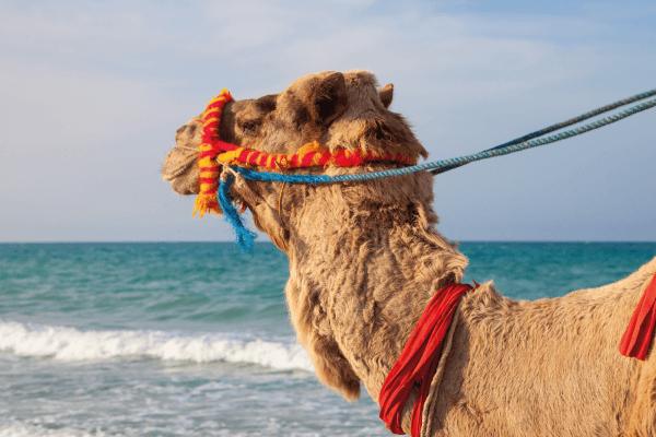 Djerba last minutes